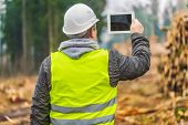Lumberjack filmed piles of logs with tablet PC in forest