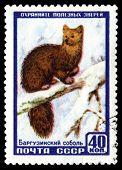 Vintage  Postage Stamp. Barguzin Sable.
