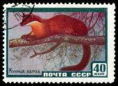 Vintage  Postage Stamp. Marten Hartha.