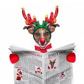stock photo of christmas dog  - jack russell dog dressed as santa reading the christmas issue on the newspaper isolated on white background - JPG