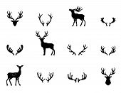 stock photo of deer horn  - Black silhouettes of different deer horns - JPG