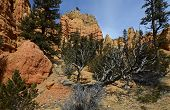 Red Canyon Landscape