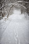 Footprints on snowy path through forest with heavy branches under snow in winter blizzard. Ontario, Canada.