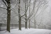 Snowy trees and fence along winter road covered in thick snow. Toronto, Canada.