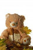 Toy Bear With Leaf