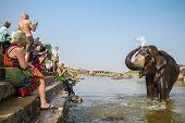 HAMPI, INDIA - FEBRUARY 1, 2013: Unidentified tourists watching Lakshmi, the temple elephant, taking a bath in the river on February 1, 2013 in Hampi, Karnataka, India