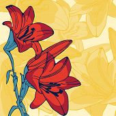 picture of lillies  - Elegant illustration of lilly flowers - JPG