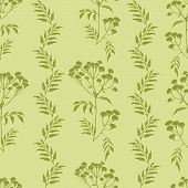 picture of tansy  - Beautiful vector pattern with nice tansy flowers - JPG