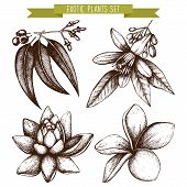 image of tropical plants  - Vector set of ink hand drawn exotic plants and flowers isolated on white background - JPG