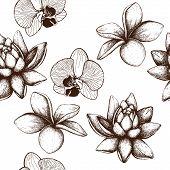 image of frangipani  - Ink hand drawn Frangipani  - JPG