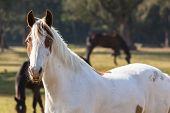 picture of animal eyes  - Horse blue eyes white brown closeup of equestrian animal - JPG