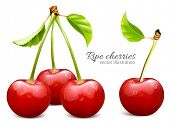 stock photo of cherry  - Ripe red cherries with leaves - JPG