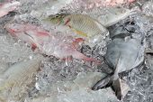 Tropical reef fish on ice at market