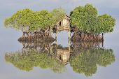 Fisherman's hut among mangroves