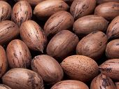 pic of pecan nut  - Color photo of several pecans in the shell - JPG