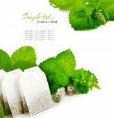 Teabags and fresh mint leaves