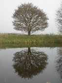 Tree Reflection 02