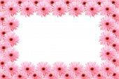 Framework from pink flowers gerbera