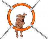 vector - agilidade do cão, isolado no fundo