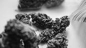 Strains Of Marijuana For Sale. Medical Marijuana And The Legalization Of Marijuana In The World. Shl poster
