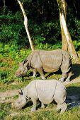 2 rinoceronte negro no Nepal do Parque Nacional de chitwan