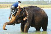 montando um elefante (série: parte 4 de 5)