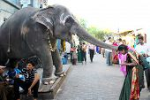 Elephant blessing people at a hindu temple in Pondicherry, India