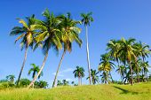 Tropical landscape with palm-trees between Baracoa and Maguana on Cuba