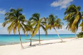 Tropical beach with white sand, palm-trees and blue ocean on Maria la Gorda, Cuba
