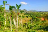 Valley of Vinales in Pinar del Rio, famous for tobacco plantations in Cuba, world heritage site of Unesco
