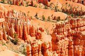Bryce canyon with orange hoodoo's