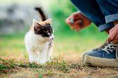 Little furry kitten on a grass outdoors poster