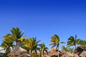 Mayan riviera tropical sunroof palapa hut skyline with coconut palm trees under blue sky