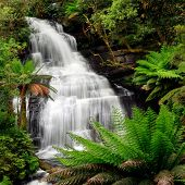 stock photo of triplets  - Waterfall in lush ferny rainforest - JPG