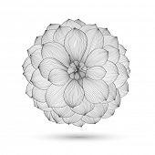 Abstact floral. Dalia flor de vector. Elemento de diseño.
