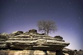 Tree and rocks at night with star trails.Star movement is caused by Earth's rotation and camera's long exposure.
