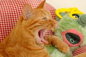 Cat and doll is yawing