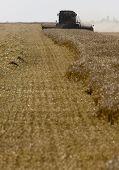 Harvest Combining Saskatchewan