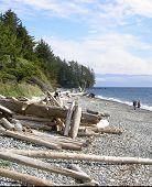 Driftwood Walk