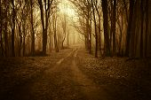 stock photo of trough  - Dark forest with fog and road trough it - JPG