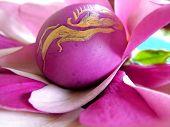 Magnollia Egg Closeup