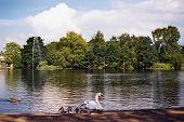 Vögel auf einem Teich