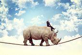 businessman ride rhino on rope
