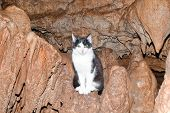 beautiful fluffy kitten sitting in a cave on stalagmite