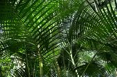Tropical forest with palm plants