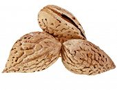 Three Almonds Seed close up  isolated on a white background