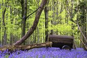 stock photo of harebell  - Old farm machinery in bluebell flowers in Spring forest landscape - JPG