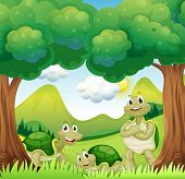 Illustration of the three turtles in the woods