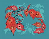 Flower background with begonia plant