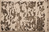 Texture Of Old Paint With Toning By Sepia
